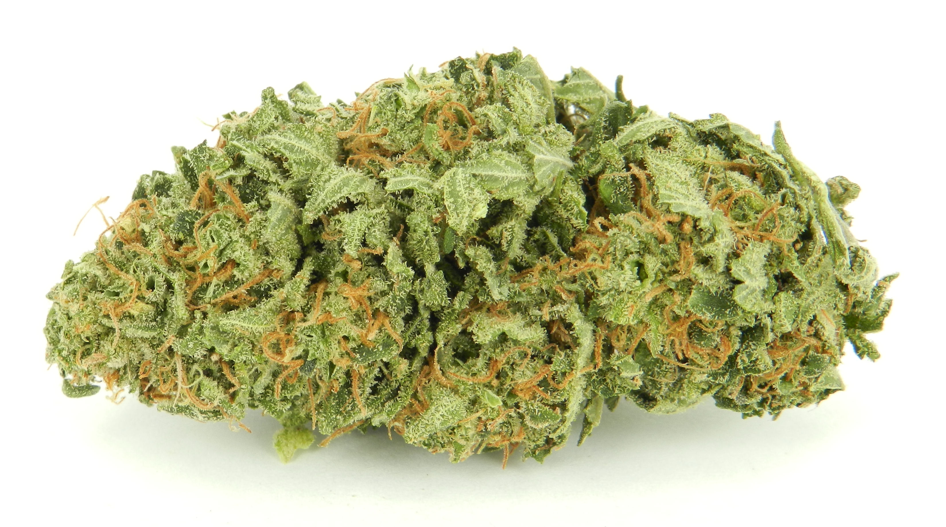 cannabis sativa Cartel de santa - cannabis sativa  this feature is not available right now please try again later.